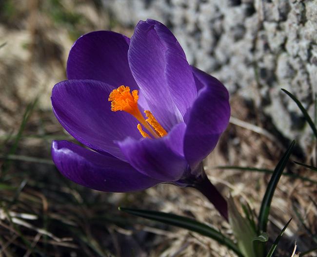 150317_blommor1