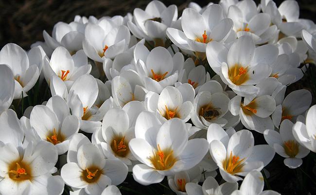 150317_blommor4