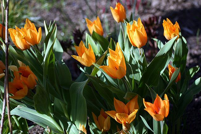 150424_blommor